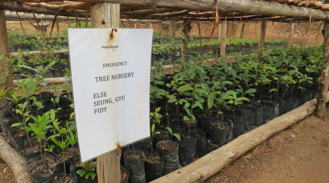 Projects Abroad lemur and rainforest conservation staff and volunteers run a tree nursery program in Madagascar.